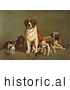 Historical Illustration of Dogs; St Bernard, Hound, Mastiff, Bulldog, Jack Russell Terrier, a King Charles Spaniel and Two Other Little Dogs at the New England Kennel Club's Dog Show by JVPD