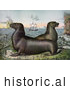 Historical Illustration of Two Sea Lions with Ships in the Distance by JVPD