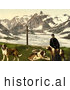 Historical Photochrom of a Man with St Bernard Dogs by JVPD