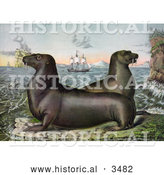 Historical Illustration of Two Sea Lions with Ships in the Distance by Al