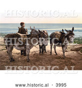 Historical Photochrom of a Little Boy by Saddled Donkeys, Waiting for a Job and Standing on a Beach in England by Al