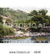 Historical Photochrom of Cattle at the River Wye in Millers Dale Derbyshire England by Al
