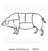 Historical Vector Illustration of a Pig Featuring Outlined Butcher Sections of Meat Cuts - Black and White by Al